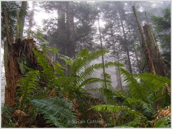 Chuckanut woodland